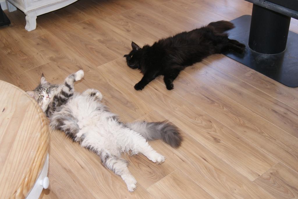 Humphrey et Newton au chaud