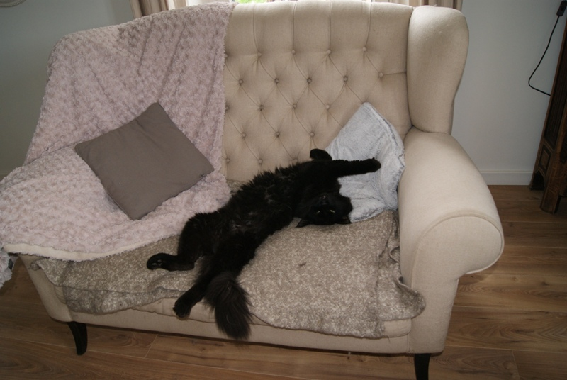 Humphrey se détend